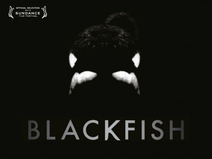 'Blackfish' sandheden om tragedien i Sea World