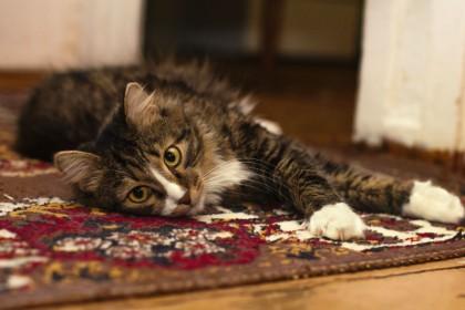 Optimalt indeklima med rensning af tæpper